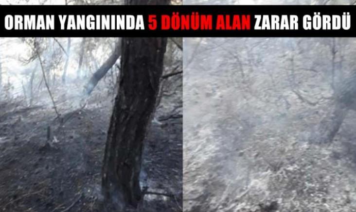 Malkara'da orman yangınında 5 dönüm alan zarar gördü