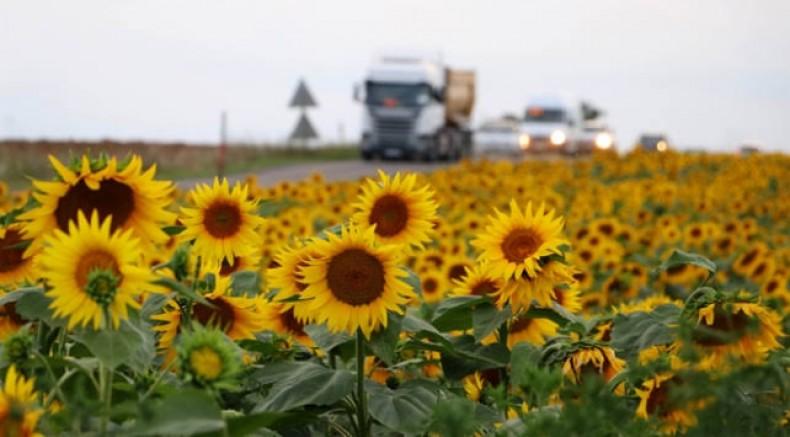 Trakya Birlik'ten ayçiçeğine 5 bin 100 TL avans ödemesi
